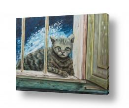 חיות בית חתולים | חתולה בחלוני