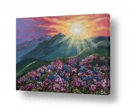 צמחים פרחים | זריחה בהר