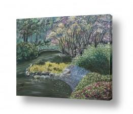 ציורים מים | גינה אקזוטית
