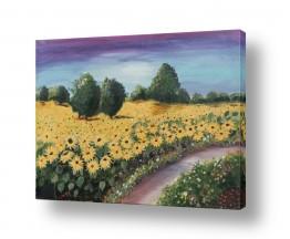 צמחים פרחים | שדה חמניות