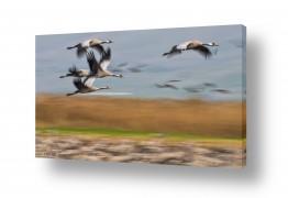 צילומים דורית ברקוביץ | לעוף