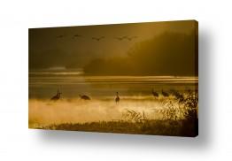 נוף זריחה | בוקר זהב