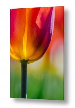 צבעים צבעוניות | זקוף