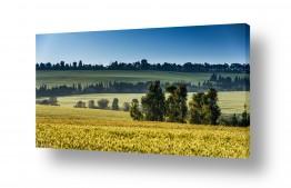 שדות חיטה | פינה ירוקה