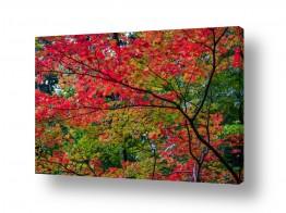צילומים דורית ברקוביץ | עץ בוער