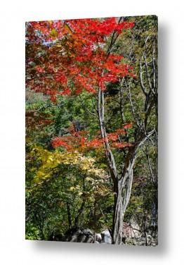 צילומים דורית ברקוביץ | צבעוניות סתווית