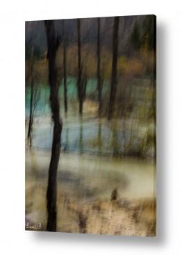 עץ גזע | אקווארל