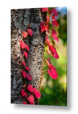 צמחים עץ | מטפס