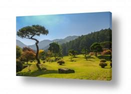 תמונות לפי נושאים דשא | עצים