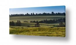 שדות חיטה | דרום צהוב