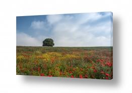 נושאים תמונות נופים נוף | לבד בין הפרחים