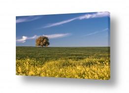 נושאים תמונות נופים נוף | בדד 2