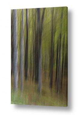 צילומים טבע דומם | יער מכושף