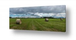 תמונות נופים נוף נוף פנורמי | עונת הקציר