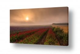 צילומים תמונות נוף | זריחה בערפל