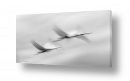 צילומים דורית ברקוביץ | לעוף בזוג