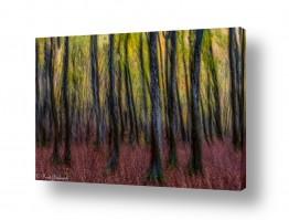 צילומים עיבודים | ביער