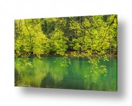 צילומים מזג-אוויר | גוונים של ירוק