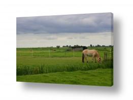 צילומים כפרי | סוס