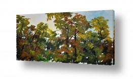 תמונות לפי נושאים צמרות עצים | צמרות
