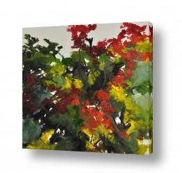 צמחים עץ | צאלון