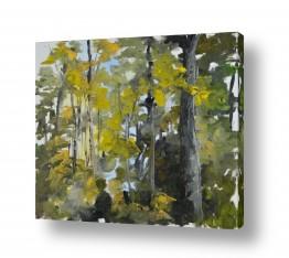 נוף תמונה פנורמית | היער הירוק תמיד...