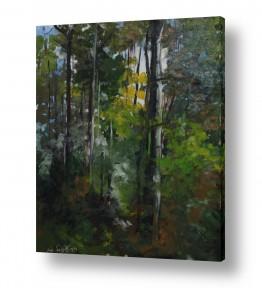 ציורים טבע דומם | עמוק ביער