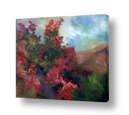 צמחים פרחים   העץ האדום
