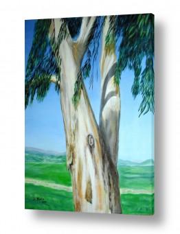 אסתר חן-ברזילי אסתר חן-ברזילי - אמנות מהלב - המילים הפכו לצבעים - ריאלי | איקליפטוס