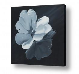 טבע פרחים | טיפות