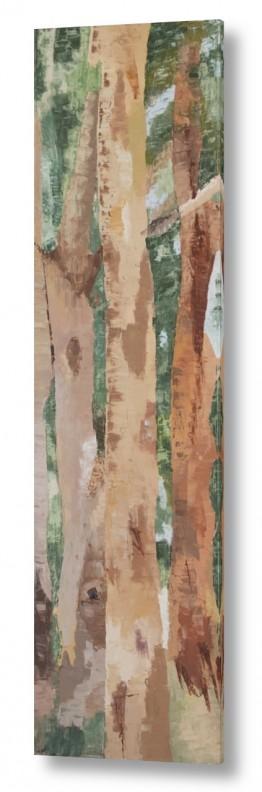 אסתר טל אסתר טל - ציורי שמן ריאליסטיים - עץ | אקליפטוס