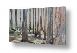 אסתר טל אסתר טל - ציורי שמן ריאליסטיים - עץ | חורשת אקליפטוס