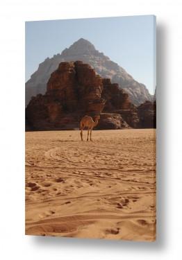 נוף מדבר | יצירות במדבר