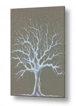 עץ שורש | אור