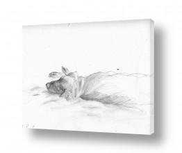 ציורים רישום | ישנה בשמש