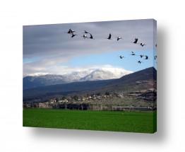 שדה ירוק ירוק | עגורים