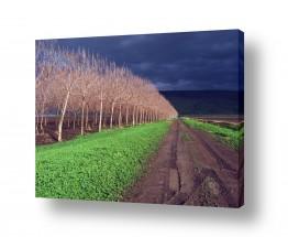צילומים תמונות נוף | לאחר הגשם