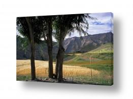 שדות חיטה | העמק הקסום