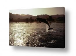 חיות מים דולפין | אהבה