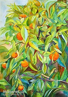 תפוזים בשמש