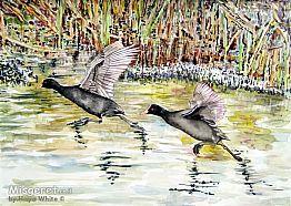 שתי ציפורים על נהר היר