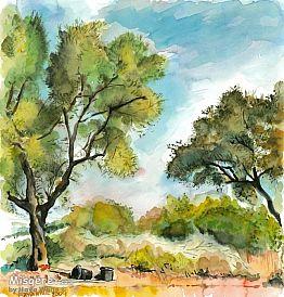 שני עצי זית