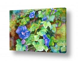 תמונות לפי נושאים שקוף | פרח מטפס כחול