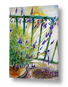ציורים ציור בצבעי מים | לבנדר על הגג