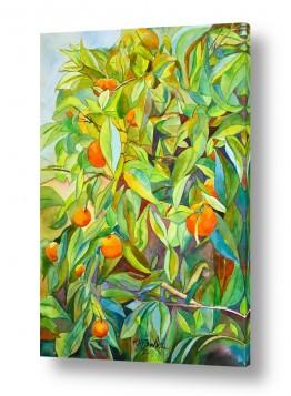 תמונות לסלון | תפוזים בשמש