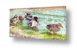 תמונות לחדרי כניסה | ברווזים