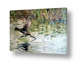 אמנים מפורסמים ציורים שנמכרו | צפור מדלגת על מים זורמים