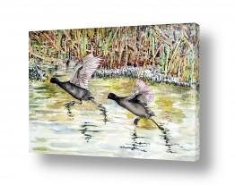 ציורים חיה וייט | שתי ציפורים על נהר הירדן
