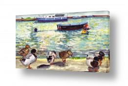 כלי שייט סירה | ציפורי מים