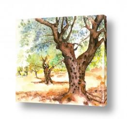 ציורים עירוני וכפרי |  עצי זית